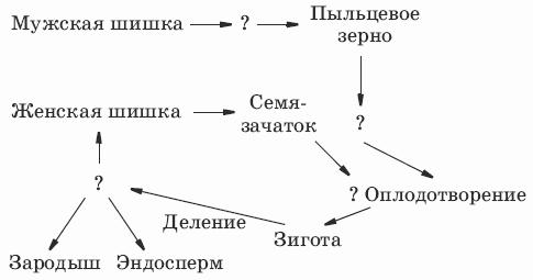 схема размножение сосны.png